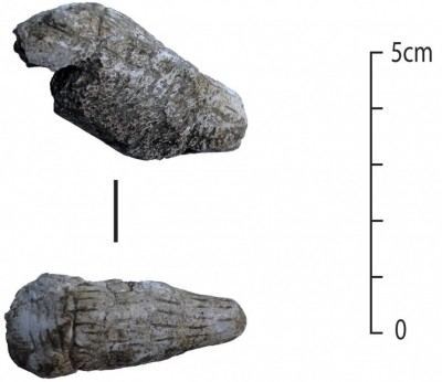 Figure 6. Carved and incised bone animal head (RN 140226).