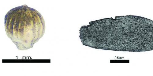 Prize Winners | Antiquity Journal