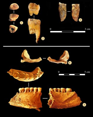 Figure 5. Anthropological remains from the Chagyrskaya Cave.