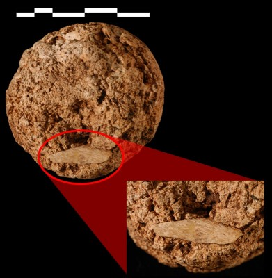 Figure 3. Cave hyena coprolite with digested bone.