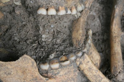 Figure 5. Human remains from Vlasac (new excavations) selected for the study of dental wear; photograph by D. Boric.
